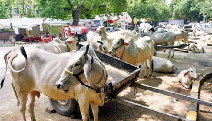 Modi govt acts tough, directs states not to tolerate any incident of attack in name of cow vigilantism