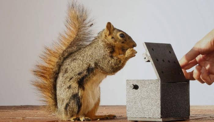 This is how squirrels show frustration! (Watch)