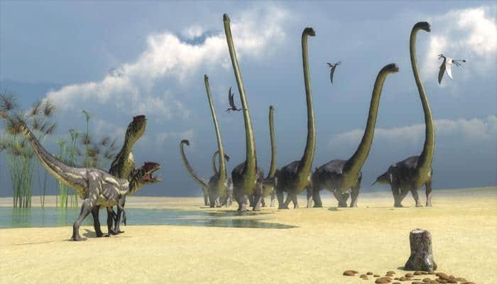 Massive titanosaur footprints found in Gobi desert