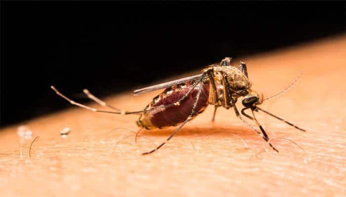 Grow plants to deter mosquitoes: Expert