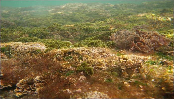 Fossilised algae may soon power electric vehicles