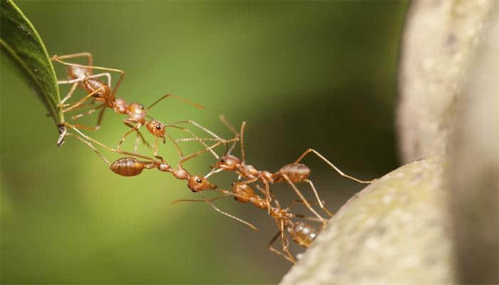 This is how how ants communicate with each other