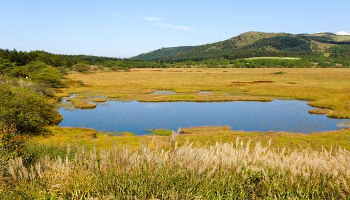 Wetlands: Why we need to take care of them, what can we do?