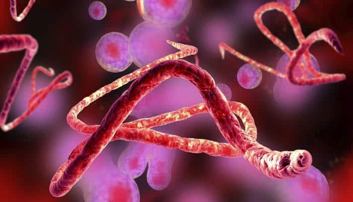Horse antibodies for Ebola infection: Effective, economical treatment developed