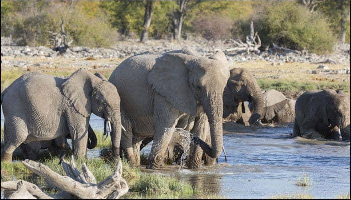 Large mammals ideal ambassadors for conservation