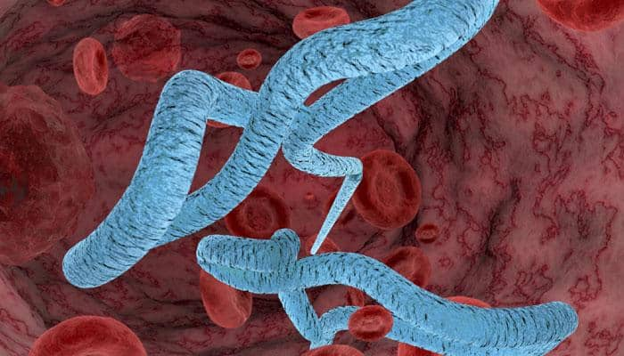 A cure for Ebola? Hepatitis drug shows promising results in treating disease