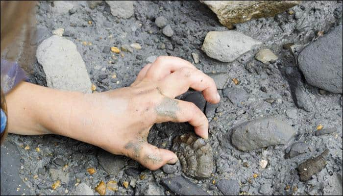 Scientists discover 70 million-year-old dinosaur egg fossils in China!