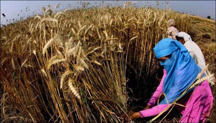 Delhi air quality shows improvement this year as crop fires reduce