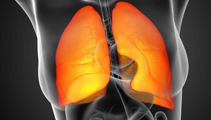 Researchers develop 3D human lung model to shed light on respiratory diseases