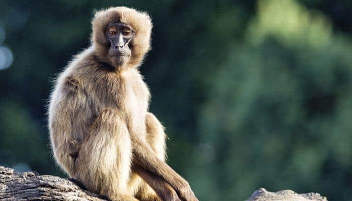 This new vaccine strategy may prevent HIV infection in monkeys!