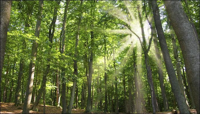 2025 to be a period of forest downfall? ISRO scientists predict India's green cover loss!