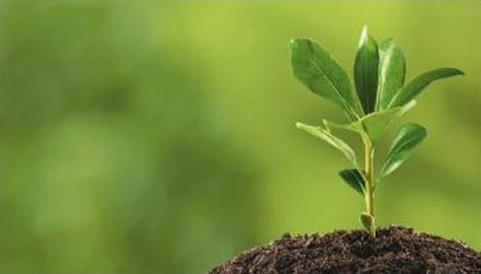 Over 300 plant species discovered in 2016: Botanical Survey of India