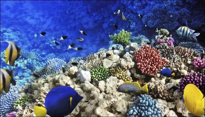 Bizarre marine creature resembling a male reproductive organ creates waves on social media! - PIC INSIDE