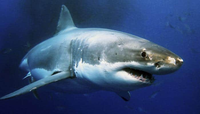 Sharks could hold genetic secret to long life