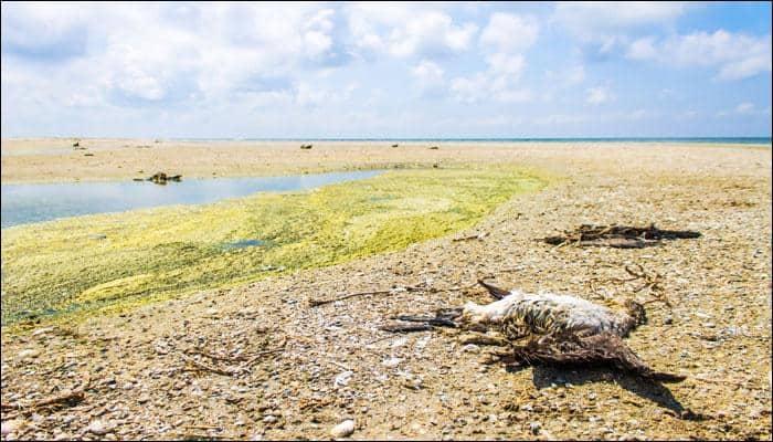 Biological annihilation: Earth undergoing sixth mass extinction