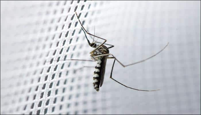 Eradication of mosquitoes not the right solution to get rid of vector-borne diseases, say scientists! - Know why