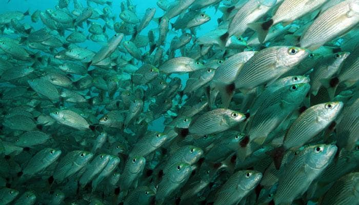 Climate change may shrink fish size by 30 percent, says study