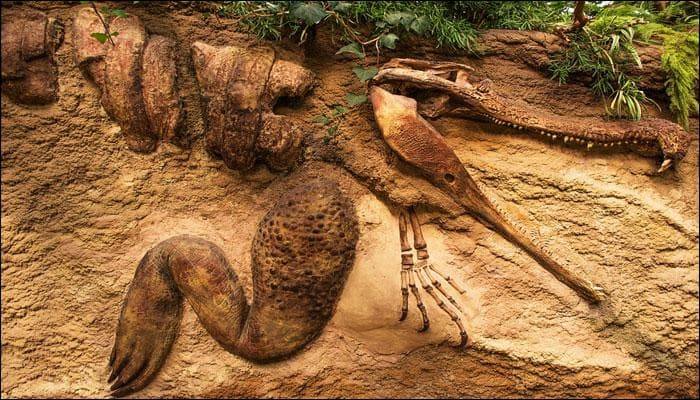 New species of gigantic, long necked dinosaurs found