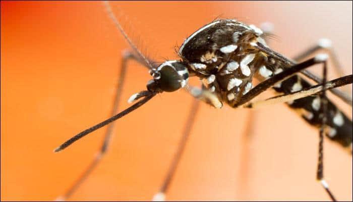 Dengue on the rise in Delhi – Common symptoms, preventive measures