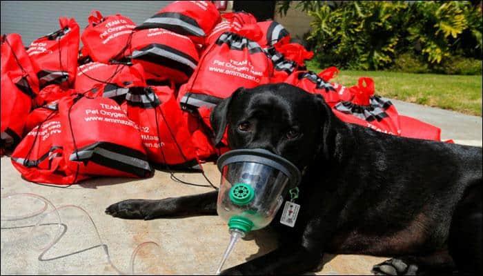 After Irma, special oxygen masks helped Florida pets breathe easier