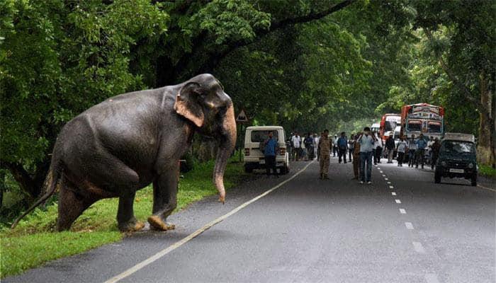 Assam's Kaziranga National Park opens for tourists