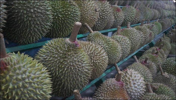 Why does durian stink? Scientists reveal one of nature's smelliest secrets