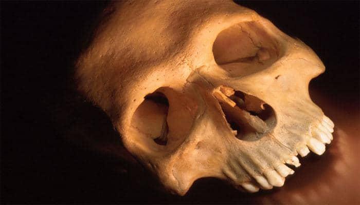 Ancient human skull of world's oldest-known tsunami victim found