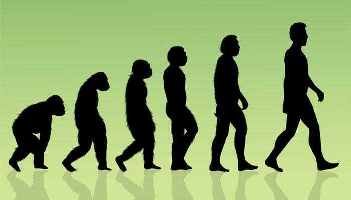 Human evolution is uneven, punctuated: Study