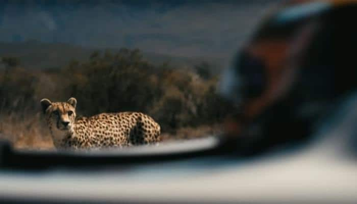 WATCH: World's fastest cat takes on super fast car