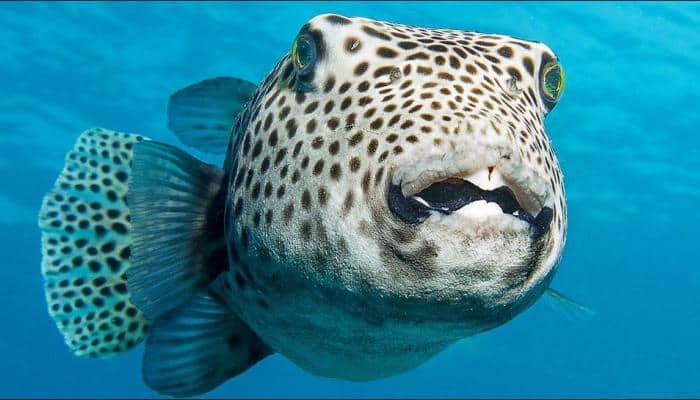 The identity of the 'world's heaviest bony fish' has finally been clarified