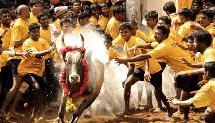 Now Aadhaar mandatory for Jallikattu in Madurai
