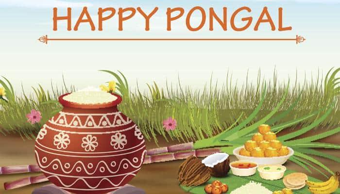 Tamil Nadu celebrates Pongal with traditional fervour