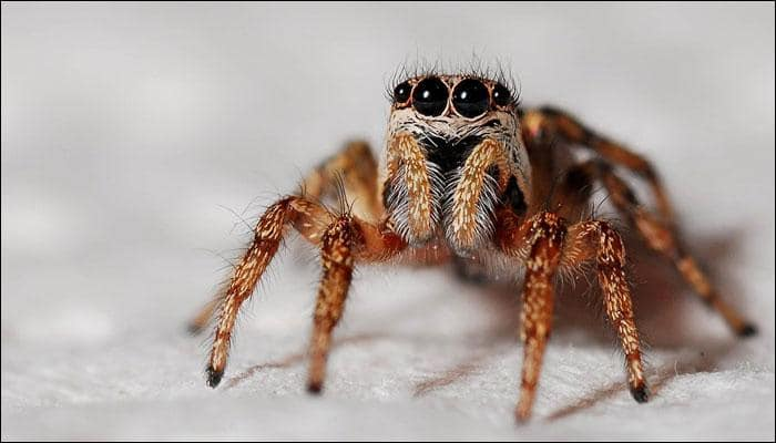 Seven new species of spiders discovered; named after Harry Potter, GoT characters