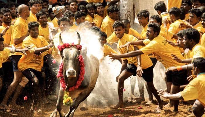 Teenager gored to death during Jallikattu festival in Tamil Nadu's Madurai