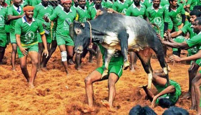 Three spectators attacked, killed by bulls during Jallikattu in Tamil Nadu