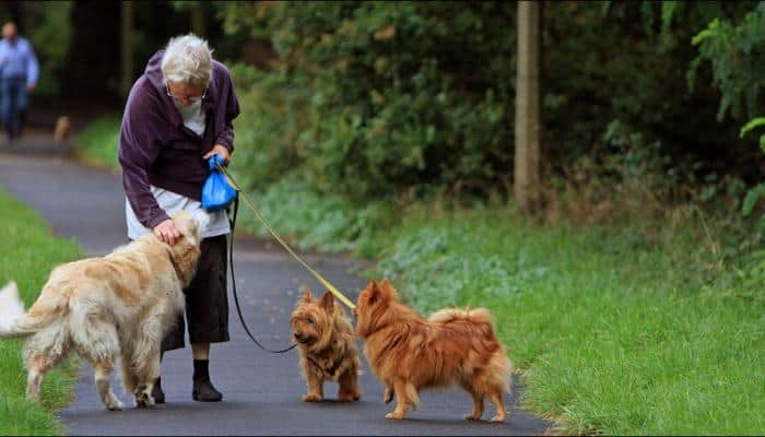 Walking the dog may help older adults live longer, suggests study