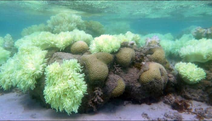 Coral reefs threatened by ocean acidification; may dissolve before 2100: Study