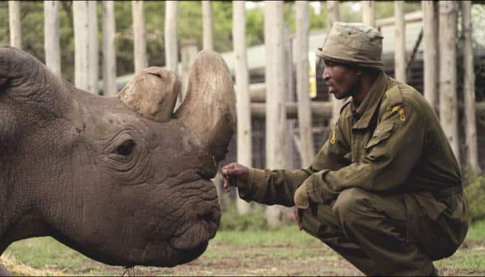 Sudan, the world's last male northern white rhino dies in Kenya
