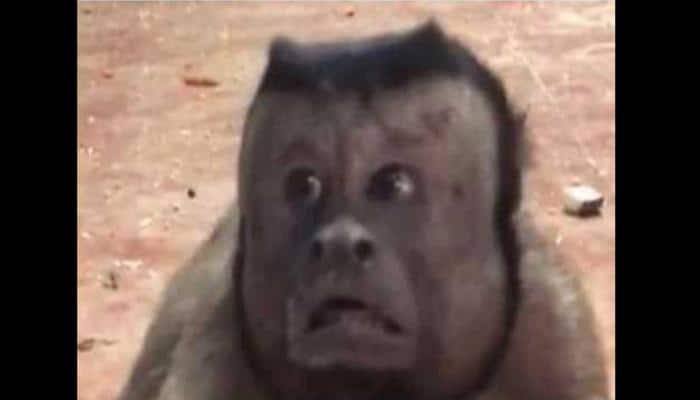 Bizarre! Monkey with human-like face baffles social media