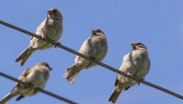 Urban areas crowded with more 'nuisance' birds: Study