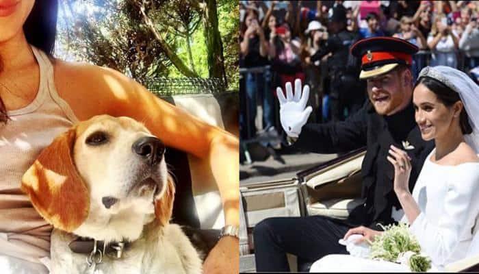 Meet Guy, the dog who accompanied Meghan Markle at the Royal Wedding