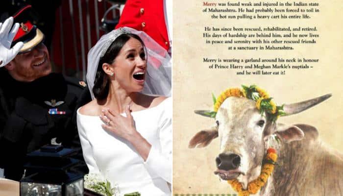 PETA India's gift for Prince Harry-Meghan wedding - A bull named Merry