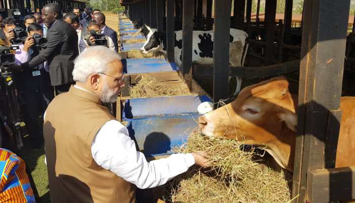 PM Modi gifts 200 cows to Rwanda village, says Indians would be happy to know importance being given to cows