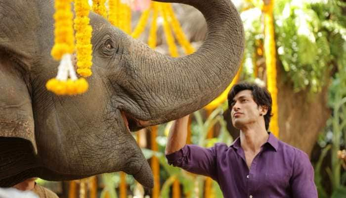 Vidyut Jammwal's 'Junglee' gets a new release date, check out fresh stills