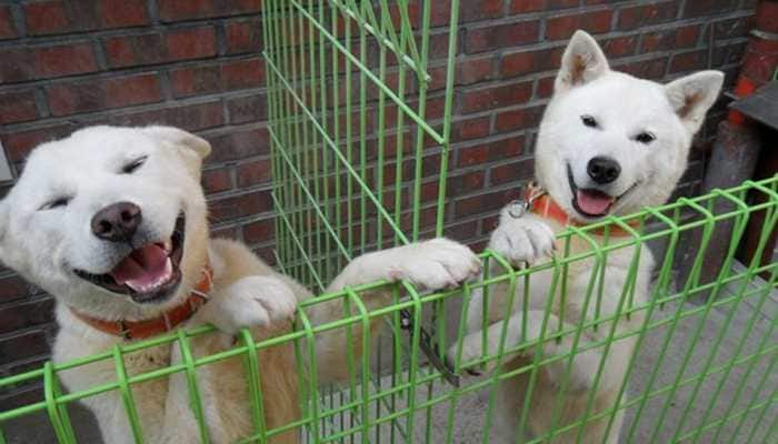 Paws for peace: North Korea's Kim sends 2 dogs to South Korea's Moon Jae-in