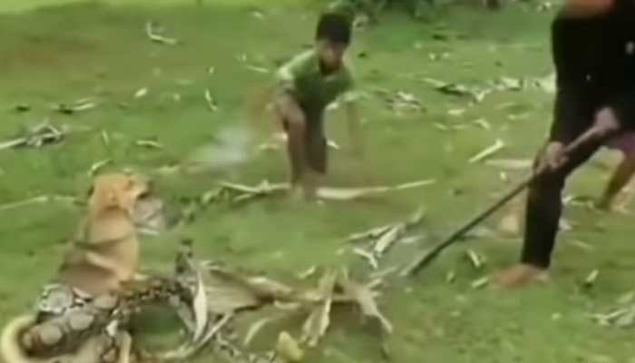 Watch: Snake tries to kill dog, 3 boys rescue miraculously