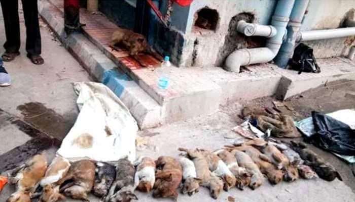 Kolkata: 2 arrested for killing 16 puppies at hospital premises