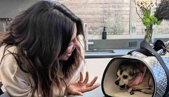 Priyanka Chopra's pooch gets a fancy travel home for worth Rs 1 lakh