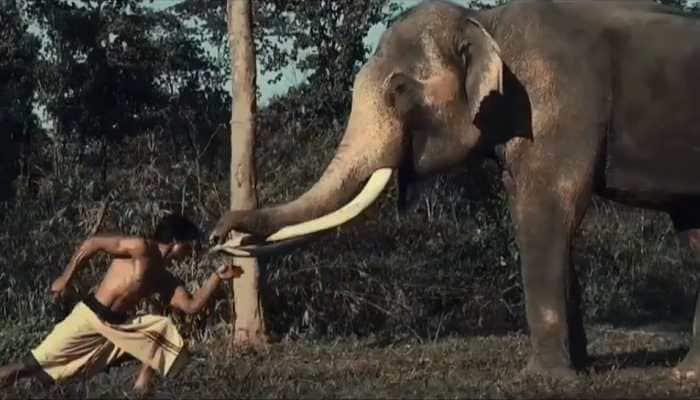Vidyut Jammwal planning 'Junglee' franchise