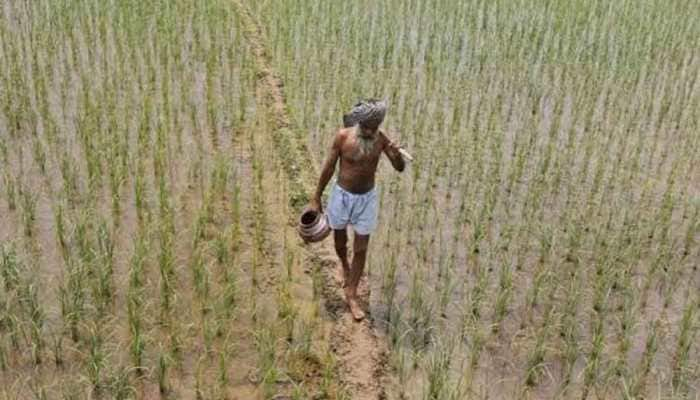 Diversifying crops will mitigate climate impact in India: Study
